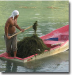 Очистка озера в Центральном парке им. Навои (бывш. Комсомольское озеро). Фото ИА Фергана.Ру