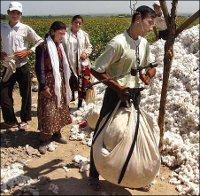 Узбекистан: В Намангане все студенты ушли на «хлопковый фронт»