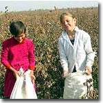 Children picking cotton. Denouncement from the Embassy of Uzbekistan in London