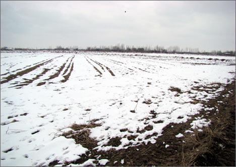 Поля под снегом. 6 февраля 2008 года
