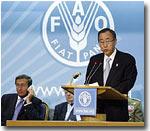 «Голодный» саммит ООН: Нуждающимся в продовольствии странам будет выделено около $3 млрд.