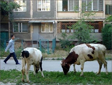 Ташкент, Массив Юнус-Абад