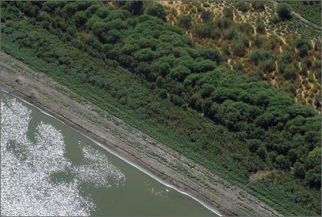 Сырдарья выше Шардаринского водохранилища