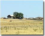 Казахстан: Из-за засухи чабаны намерены забить до осени большую часть скота