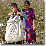 Дети на хлопке, Узбекистана