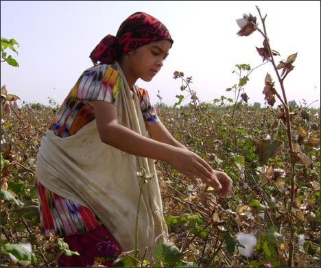 Дети на хлопковых полях Наманганской области Узбекистана