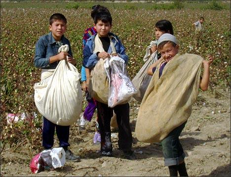 Несовершеннолетние дети на хлопковых полях Наманганской области Узбекистана