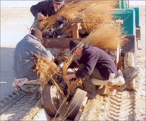 Механизированная посадка растений на дне Аральского моря