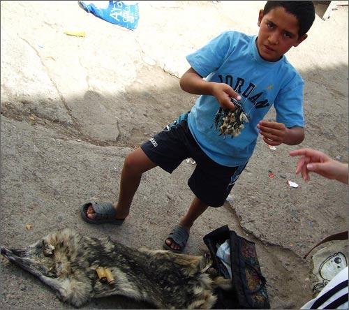 Продавец волчьей шкуры и амулетов из волчьих зубов