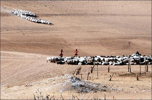 Khadzhi's flock