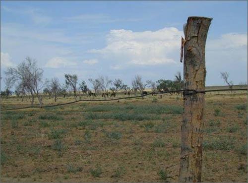 Ограда бывшего сельхозаэродрома