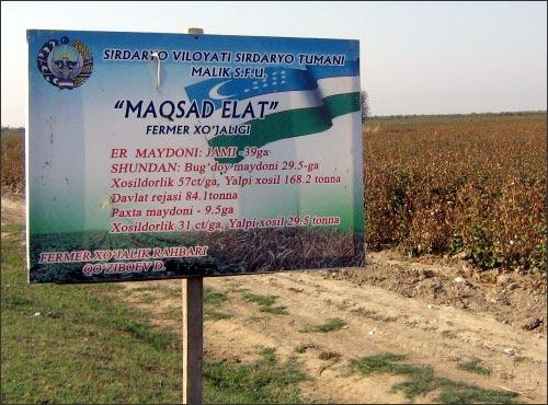 Одно из фермерских хозяйств Сырдарьинского района Сырдарьинской области Узбекистана