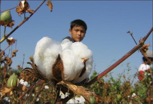 Дети на полях Узбекистана