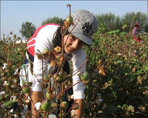 Несмотря на критику правозащитников и бойкот со стороны производителей, Узбекистан продолжает принуждать детей к труду на хлопковых плантациях