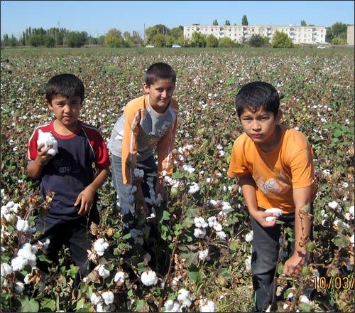 Шестиклассники на полях Ташкентской области Узбекистана