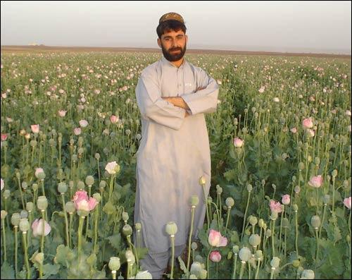 Афганец на маковой плантации