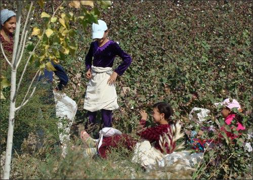 Школьники на полях Каракалпакстана
