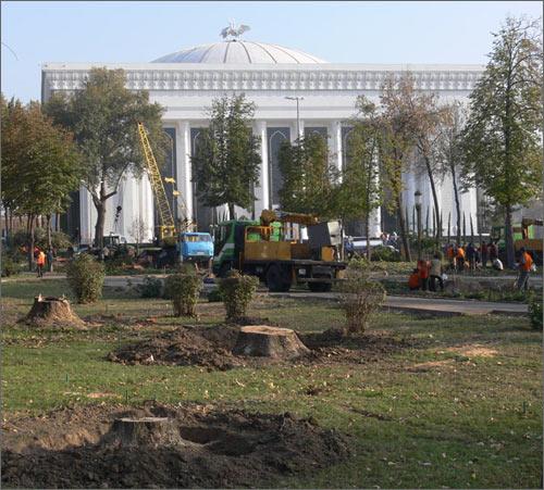 В центре Ташкента спилены столетние деревья– последние живые свидетели Российской Империи