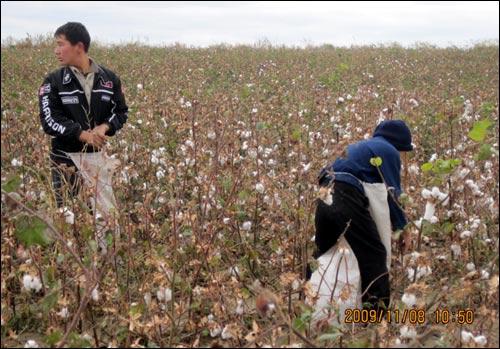 Дети на хлопковых полях Ташкентской области