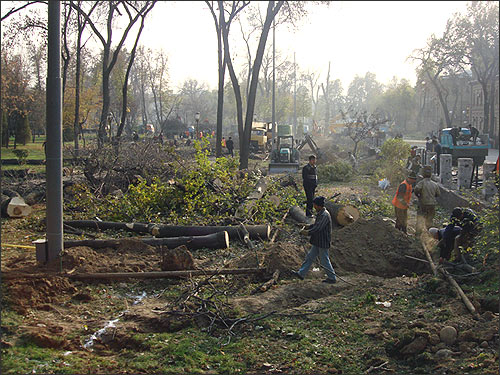 The elimination of plants is in full progress. November 15, 2009