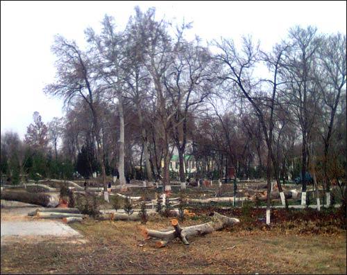 Вырубка чинар в центральном городском парке Самарканда