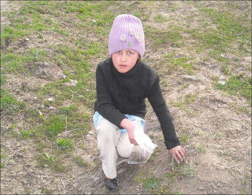Молодая жительница Спитаменского района собирает траву для самбусы
