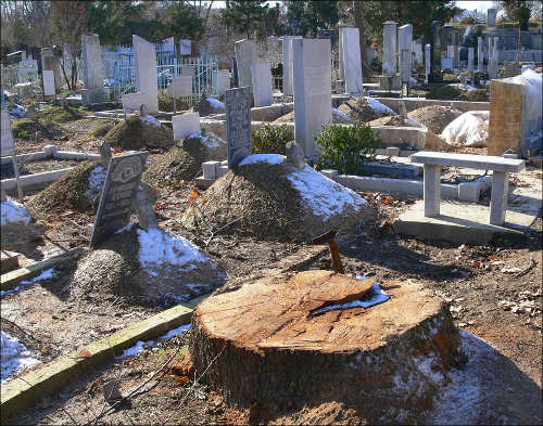 The clearance of plane trees at Minor graveyard was started last winter
