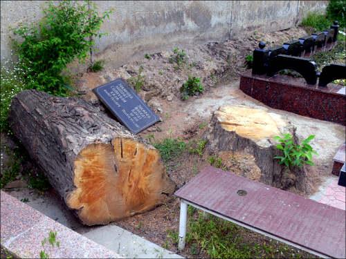 Вырубая кладбищенские деревья, вандалы от государства не щадят и могил