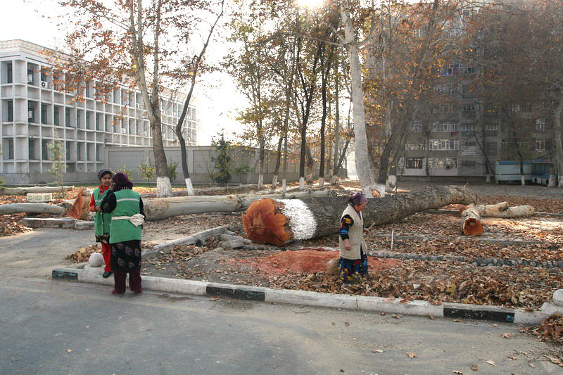 Вырубка деревьев в Фергане