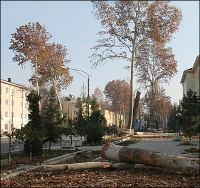 Узбекистан: Волна массовой вырубки городских деревьев докатилась и до Ферганы
