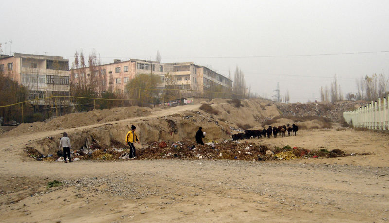 На мусорных кучах пасутся овцы, играют дети