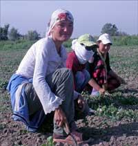 Ouzbékistan: Travail forcé dans les champs de coton pour les élèves des régions rurales