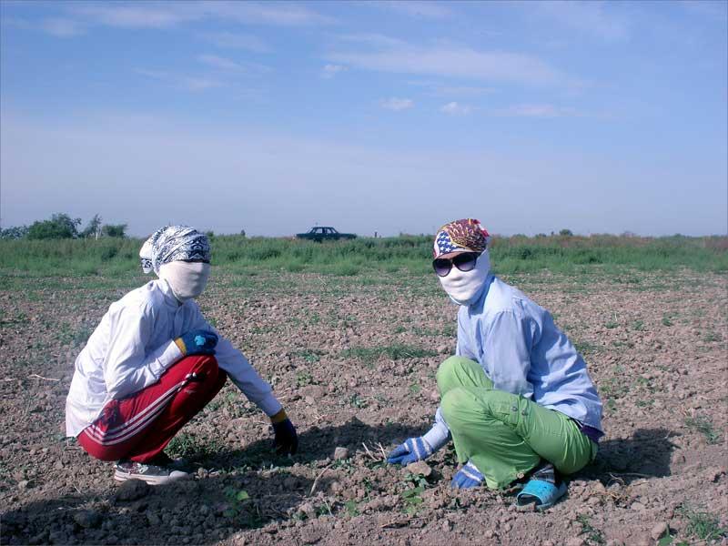 Les élèves des écoles, des lycées et des collèges en régions rurales ont passé le mois de mai à travailler sur les champs de coton