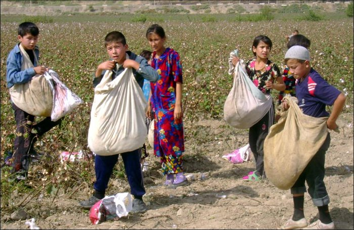 Children forced to pick cotton in Uzbekistan