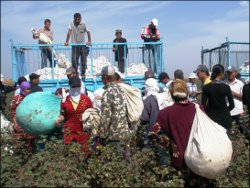 Uzbekistan 2012 Cotton Harvest: Continued State-Sponsored Forced Labor of Children and Adults