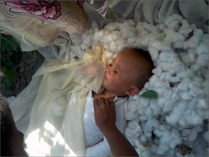 Certaines femmes viennent à la récolte avec leurs bébés