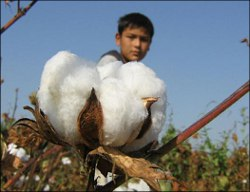 More children die on cotton fields in Uzbekistan