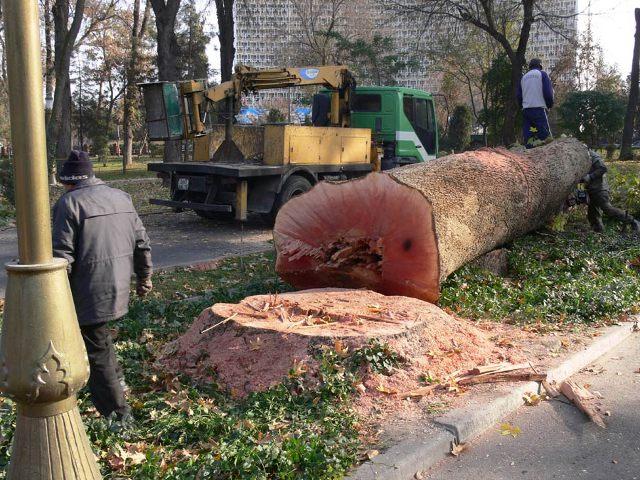 Так вырубали столетние чинары в знаменитом Ташкентском Сквере в 2009 году