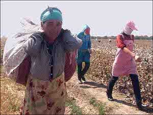Узбекистан: О сборе хлопка - из первых уст