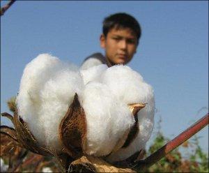Узбекистан: Европейские исследователи призывают к кардинальным реформам хлопкового сектора
