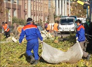 Узбекистан: В Ташкенте продолжают уничтожать здоровые деревья (фото)
