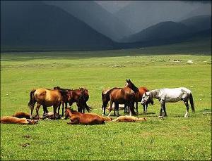 Кыргызстан: Пастбища как национальная идея