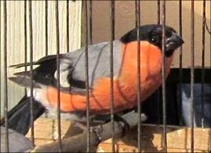 Узбекистан из-за браконьеров рискует остаться без многих видов птиц