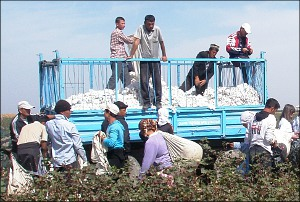 The Uzbek Cotton: The Government's Riches, the People's Curse
