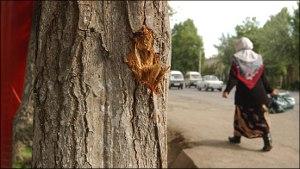 Расстрелянный Андижан. Истории из города, пережившего трагедию 13 мая