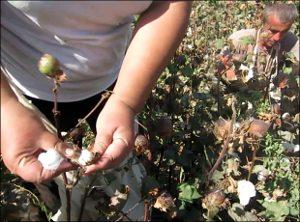 "Uzbekistan: ""We are slaves, indeed!"" A photojournalist's cotton-picking stint (+photos, video)"