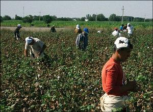 Рабы на полях