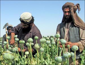 Незамуддин Бахави: «Талибан» и наркотики неразделимы