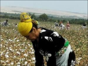 Как и кто отбеливает «белое золото» Узбекистана. Доклад Узбекско-германского форума по правам человека