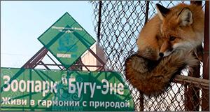 Люди и звери: Почему единственному в Кыргызстане зоопарку грозила смертельная диета